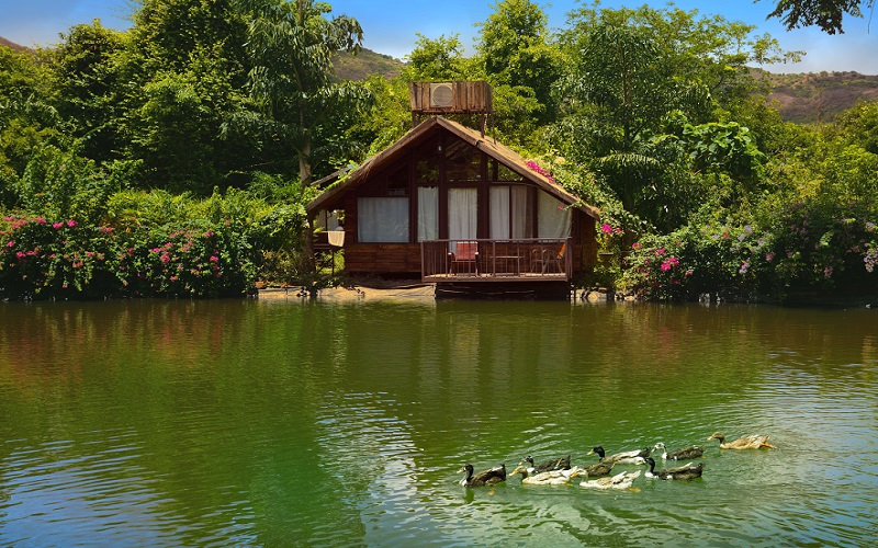 Jalsrushthi house duck water bird watching